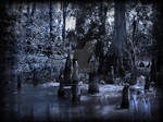 Dark Swamp Cypress