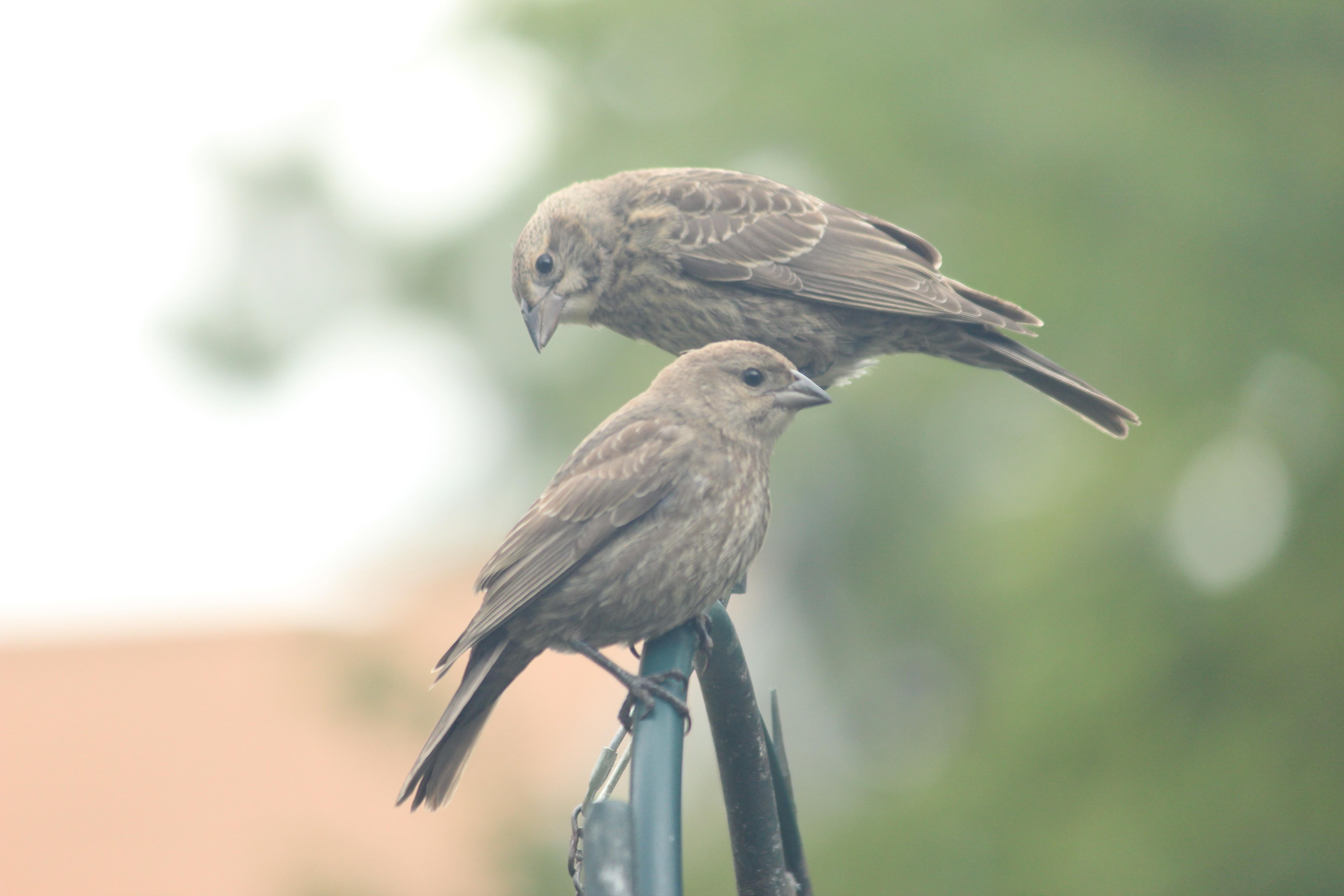 birdy, birdy by Laur720