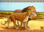 : He and She lions :