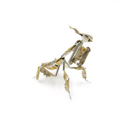 Watch Parts Praying Mantis 53 Ghost Mantis 3 by AMechanicalMind