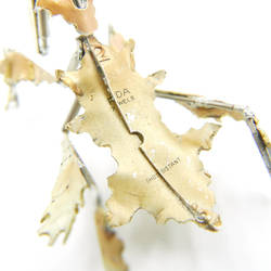 Watch Parts Ghost Mantis 7 (close, abdomen)