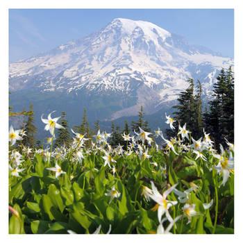 Avalanche of Majesty by hikester