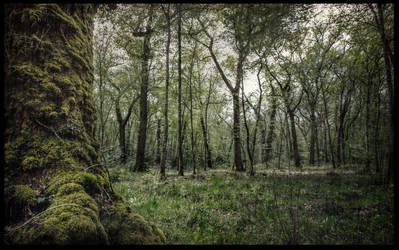 Mossy Spring by SeeLandscapes
