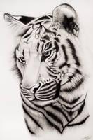 Samatran Tiger by Splash--of--Colour