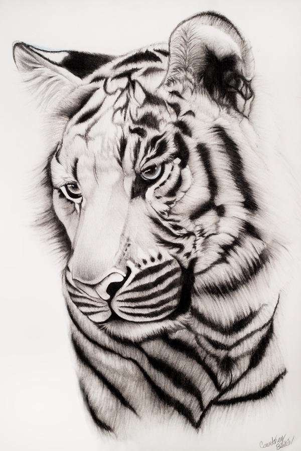 Samatran Tiger by SplashofColour on DeviantArt