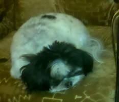 Sleeping Mop