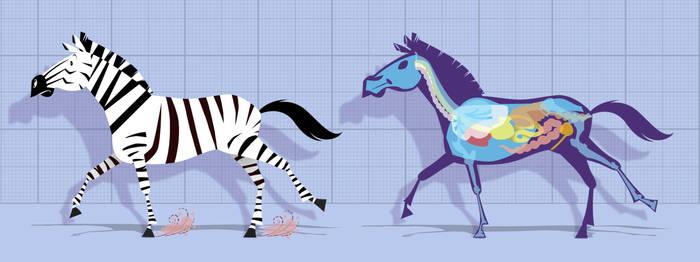 Zebra Innards