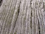 wood 02
