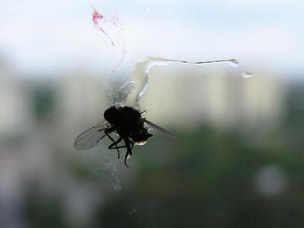 dead fly 01