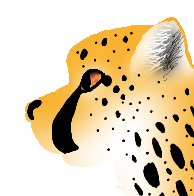 Cheetah by TimidFawn