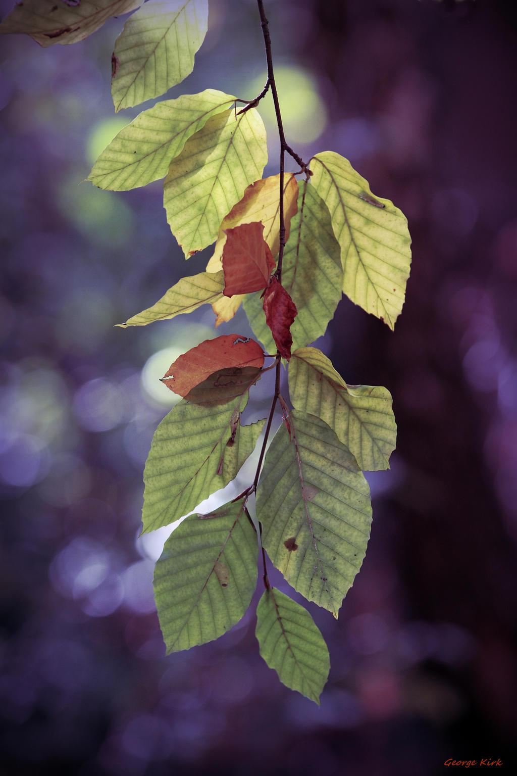 Autumn Leaves by George---Kirk