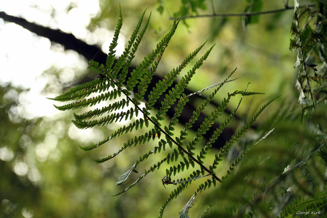 Fern by George---Kirk