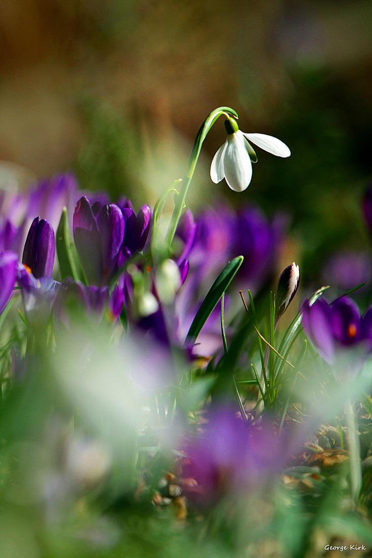 Spring dreaming by George---Kirk
