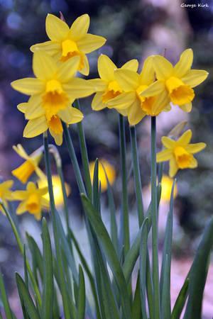 Spring sight by George---Kirk