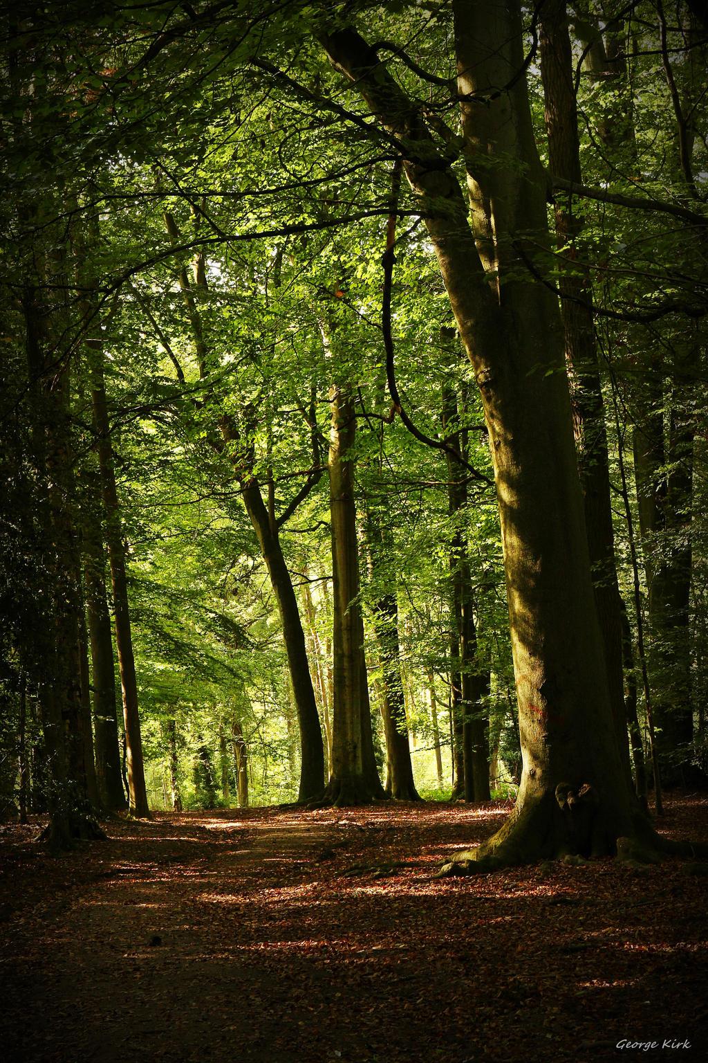 Woodland view by George---Kirk