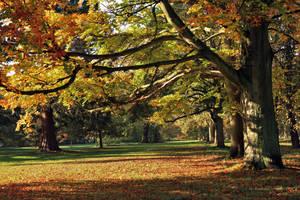 Cassiobury Park by George---Kirk