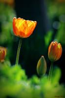 Spring light by George---Kirk