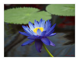 Natural Blue by George---Kirk