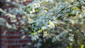 Spring Blossom by George---Kirk