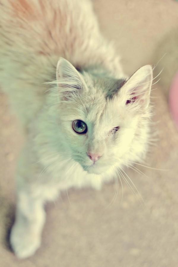 my new kitty by Nitrofires-Revenge
