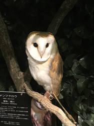 Owl Cafe 1 by Nitrofires-Revenge