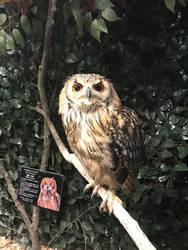 Owl Cafe 2 by Nitrofires-Revenge