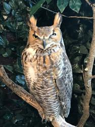 Owl Cafe 3 by Nitrofires-Revenge