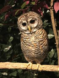 Owl Cafe 4 by Nitrofires-Revenge