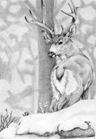 White-tail Buck by Tweakster