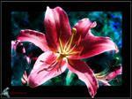 Flower by Durriem67
