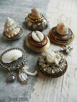 Seashell specimen magnets by janedean