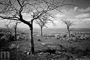 fence + plains by stranj