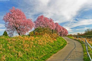 sidewalk sakura by stranj