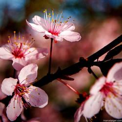 spring by stranj