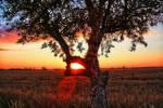Sun - Dreams 3