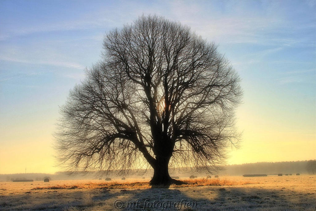 Beautiful trees 8 by mt photografien on deviantart for Beautiful drawings of trees