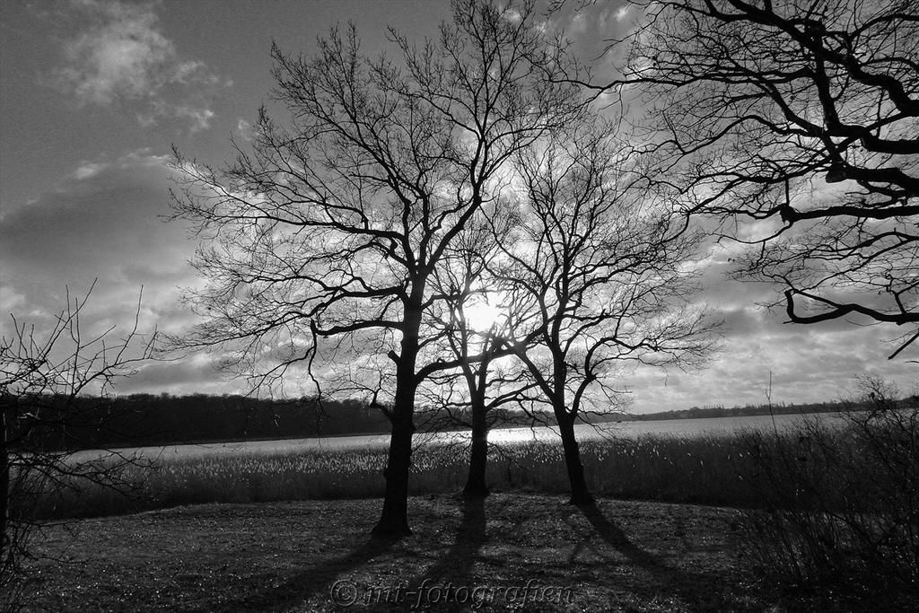 beautiful trees 12 by MT-Photografien
