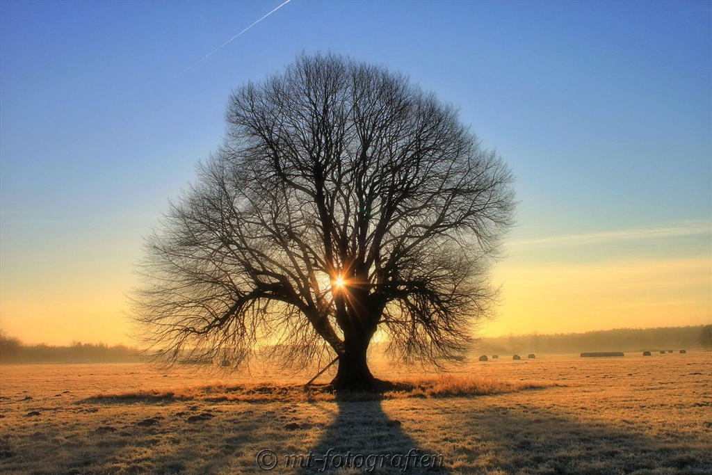 beautiful trees 16 by MT-Photografien