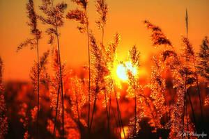 dreamland linum 5 by MT-Photografien