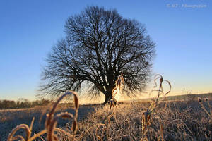 Sunrise on a beautiful frosty winter day 2 by MT-Photografien
