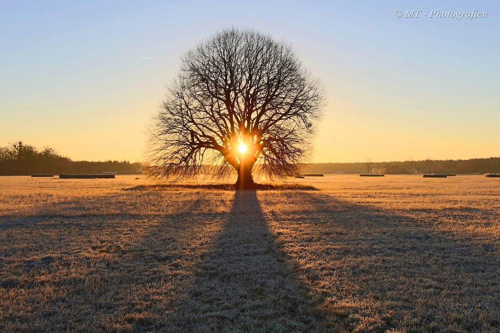 Sunrise on a beautiful frosty winter day 4 by MT-Photografien