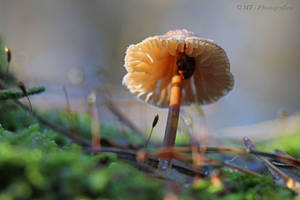 Frosty mushroom in fog by MT-Photografien