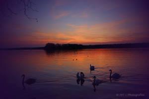 Swanlake romantic by MT-Photografien