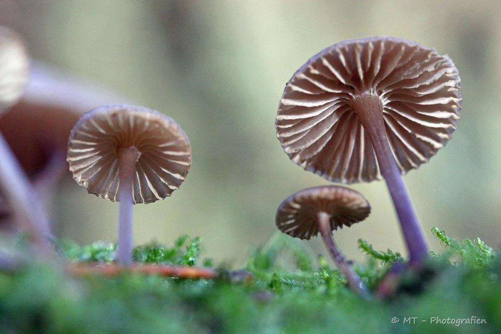 mushroom family by MT-Photografien