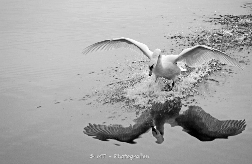 unique moments by MT-Photografien