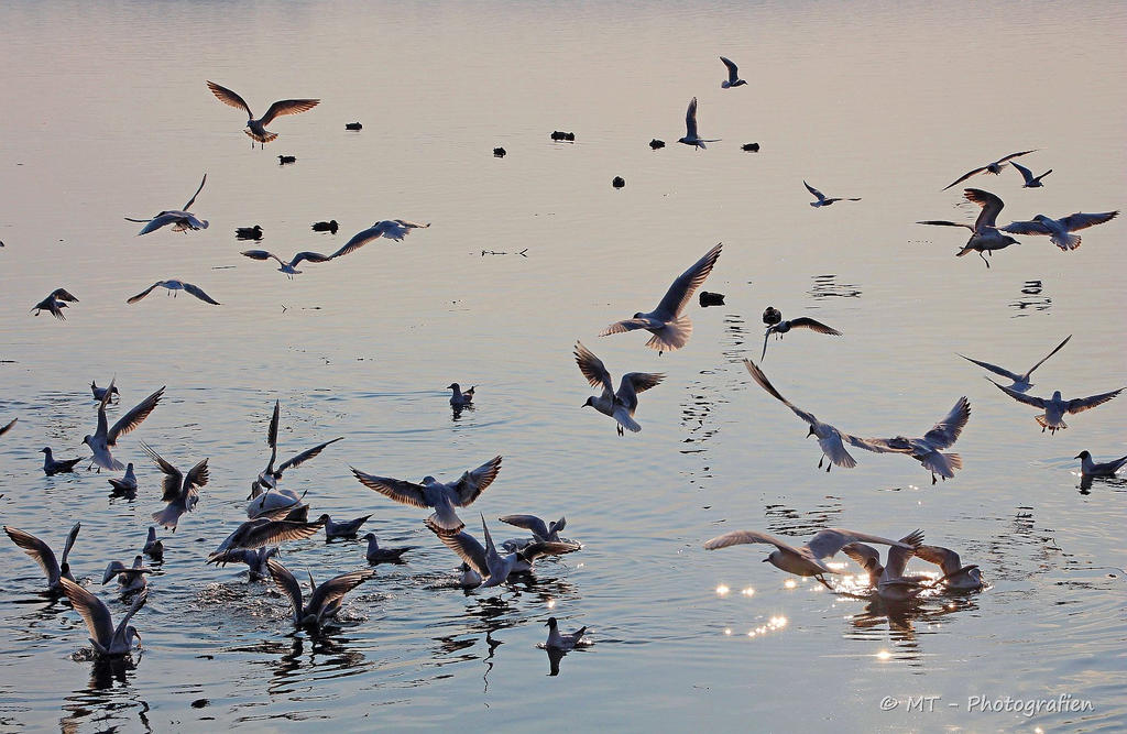 gulls look by MT-Photografien