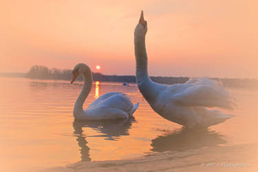beautiful moments you will not forget by MT-Photografien