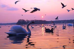 nice spring evening at Tegeler lake