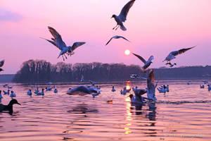nice spring evening at Tegeler lake 2