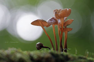 small beauties in the forest 2 by MT-Photografien